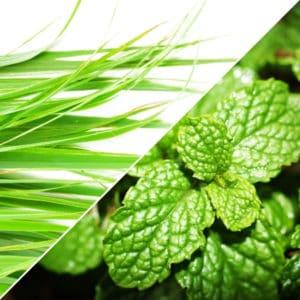 photo of lemongrass and mint leaves representing Thai Lemongrass - Mint White Balsamic