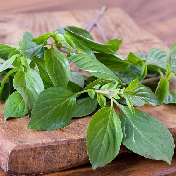photo of basil leaves representing basil olive oil