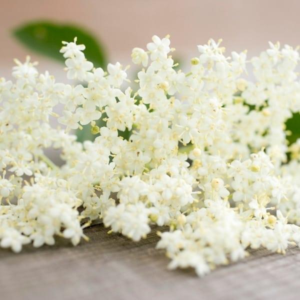 Photo of elderflowers representing elderflower white balsamic vinegar